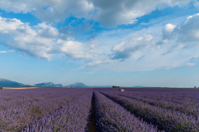 与开花的淡紫色领域和山的平静的农村场面 免版税库存图片