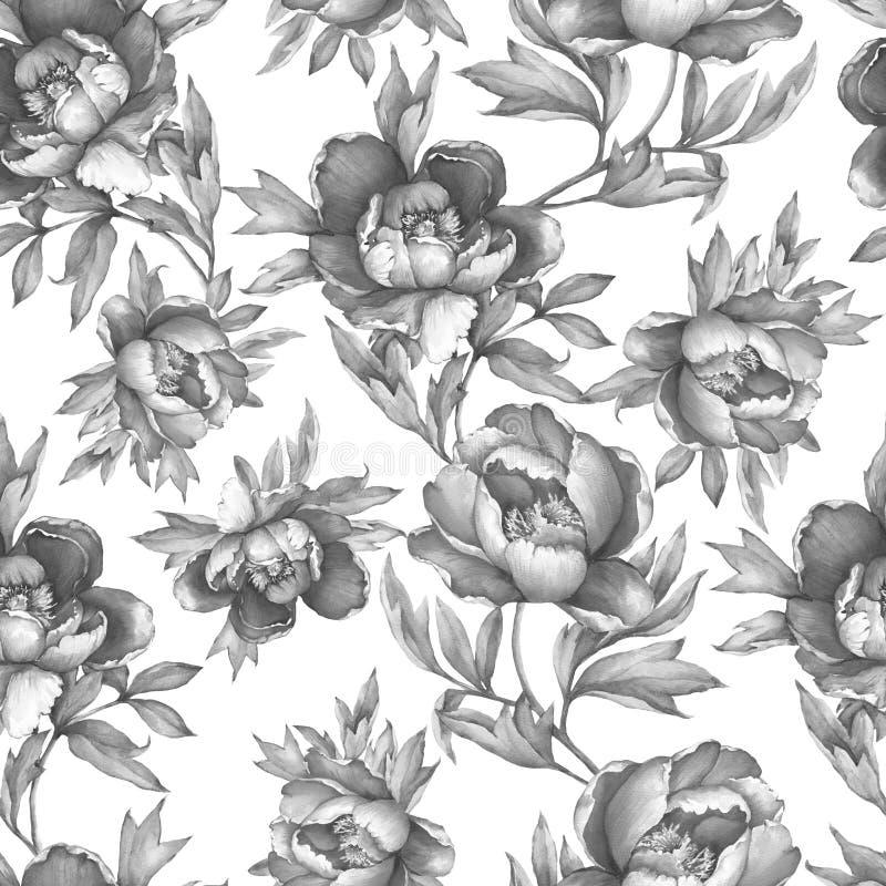 与开花的牡丹的葡萄酒花卉无缝的灰色单色样式,在白色背景 水彩手拉的绘画illust 库存例证