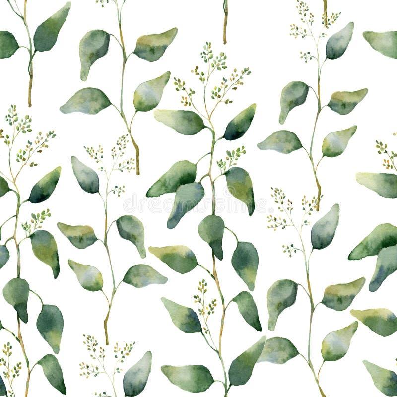 与开花的玉树的水彩绿色花卉无缝的样式 向量例证