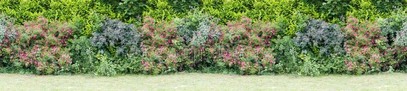 与开花的绿色树篱丛生无缝的不尽的样式 免版税图库摄影