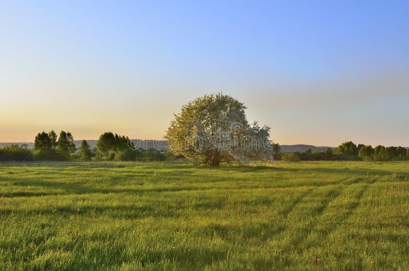 与开花的苹果树的春天landsckape 免版税库存照片