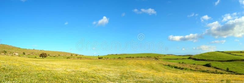 与开花的草甸和青山的风景 免版税库存照片