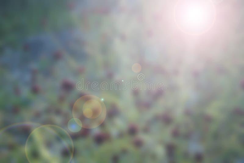 与强光的模糊的花卉背景 免版税图库摄影