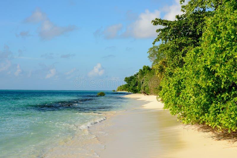 与当地树和绿松石海的热带沙滩和与少量小云彩的蓝天 库存照片