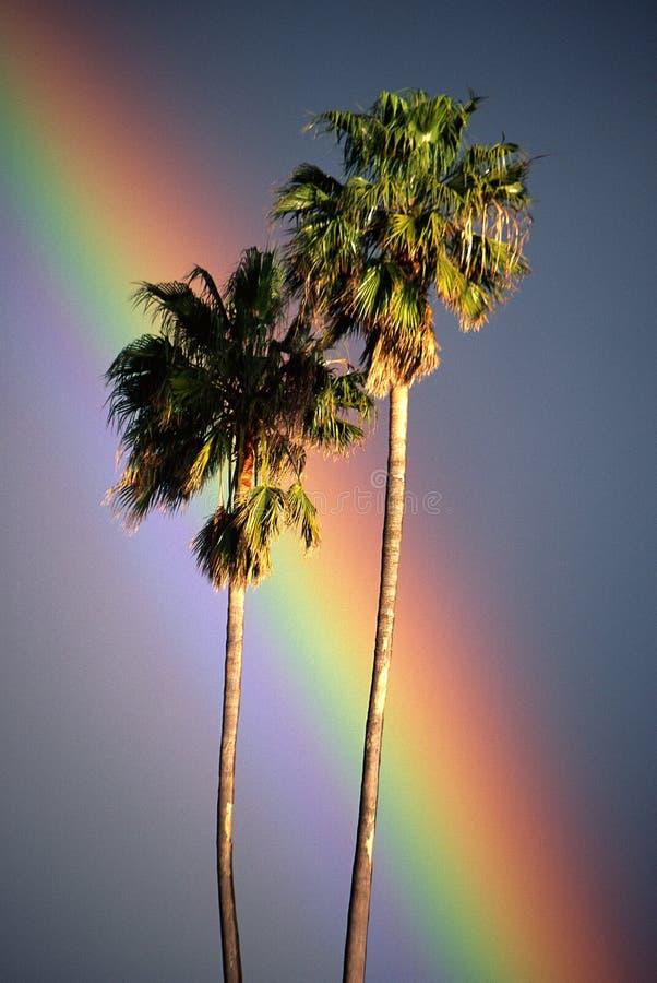 与彩虹的二棵棕榈树 库存照片