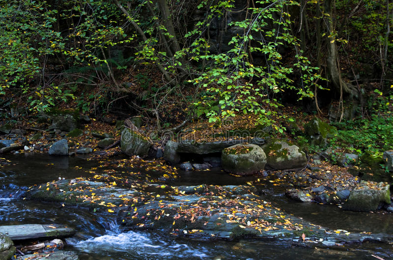 与很多下落的黄色的快速的水小河离开秋天 免版税库存照片