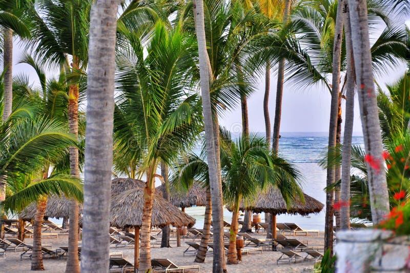 与很多棕榈和白色沙子的加勒比海滩 免版税图库摄影