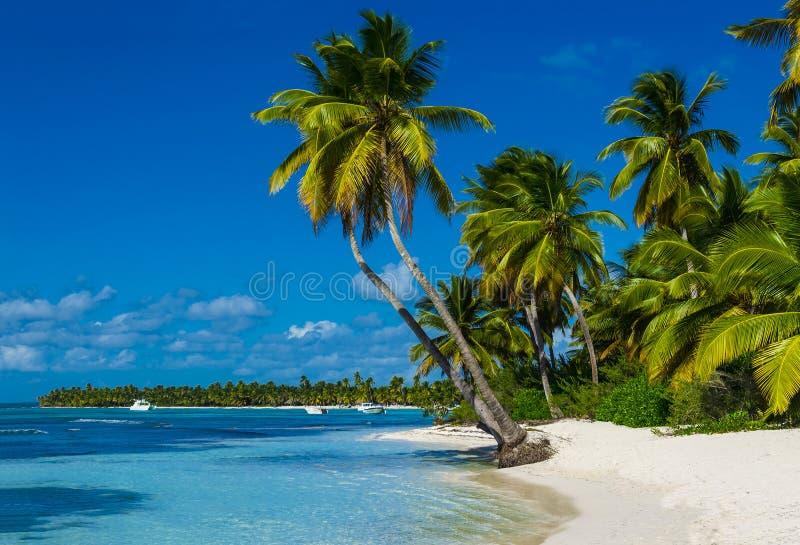 与很多棕榈和白色沙子的海滩 免版税库存照片