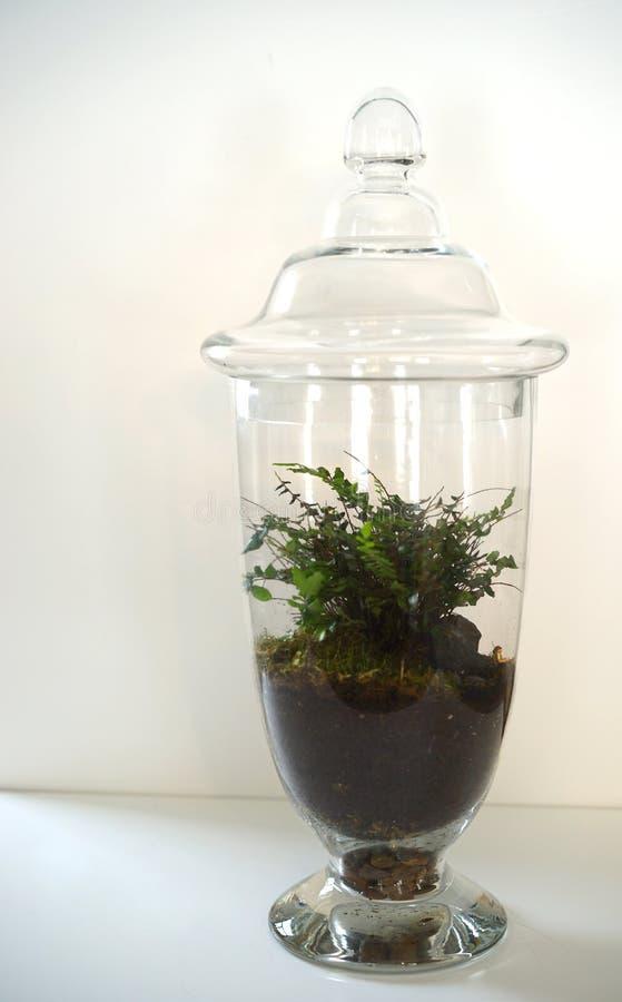 与微小的旅客的蕨生态系 库存照片