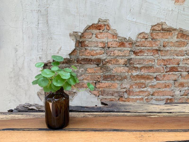 与微小的树的橙色砖墙木窗口在水泥墙壁、抽象派背景和葡萄酒墙纸上 免版税库存照片