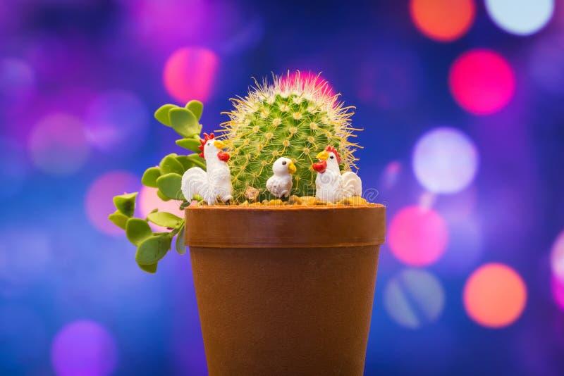 与微小的鸡的仙人掌在甜背景中 库存照片