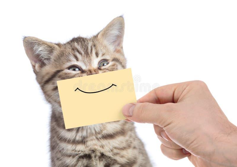 与微笑的滑稽的愉快的年轻猫画象在白色隔绝的黄色纸板 免版税库存照片