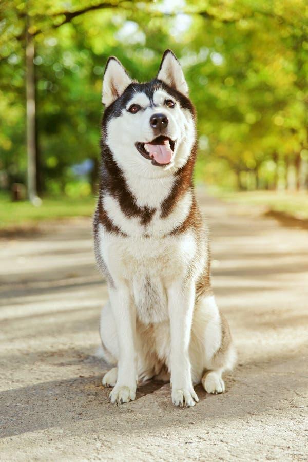 与微笑的画象多壳的狗 库存图片