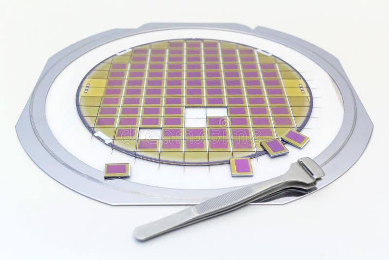 与微集成电路的硅片,固定在与一个钢制框架的一个持有人在灰色背景在切成小方块以后的过程 微集成电路 库存图片