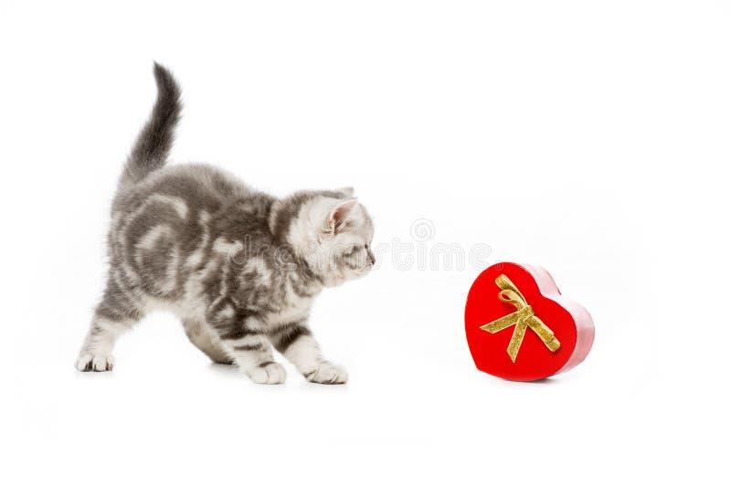 与心形的礼物的逗人喜爱的小的小猫 免版税库存照片