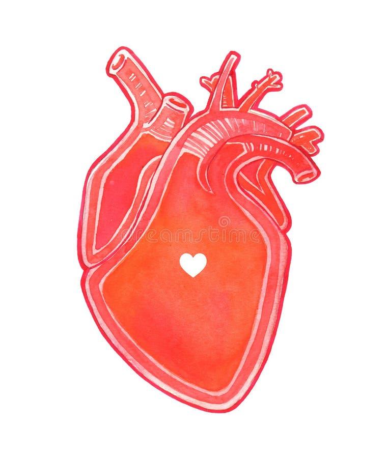 与心脏标志的水彩现实人的心脏 免版税库存照片
