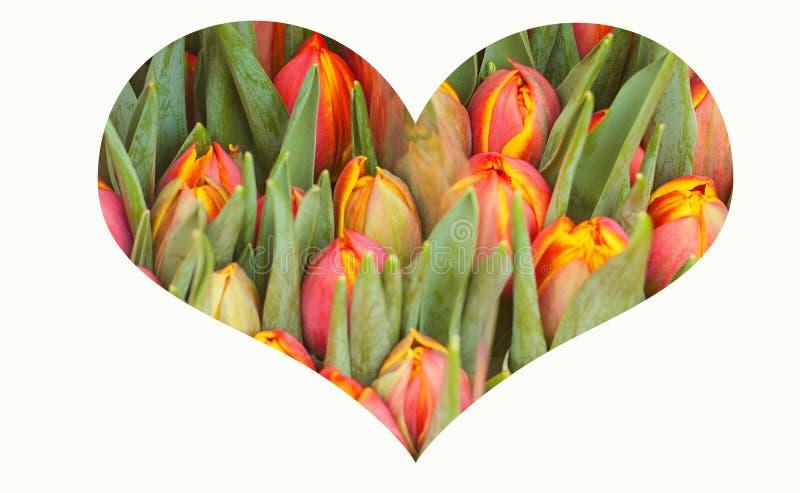 与心脏的拼贴画由五颜六色的郁金香春天背景制成 库存照片