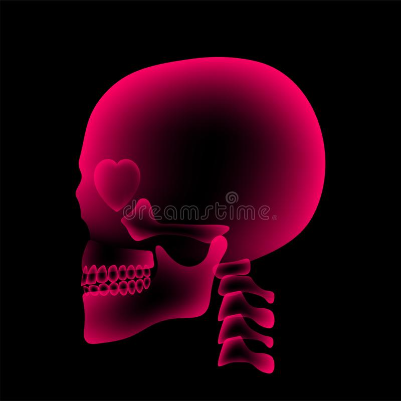 与心脏眼睛标志,爱构思设计,侧视图例证的头骨X-射线 库存例证