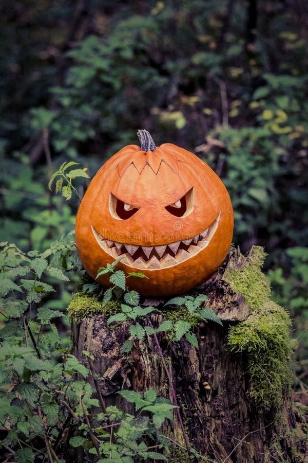 与恶魔似微笑的万圣夜南瓜在可怕树干在森林里 图库摄影
