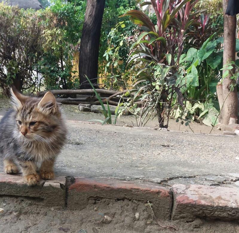 与恼怒的面孔的猫小猫 免版税图库摄影