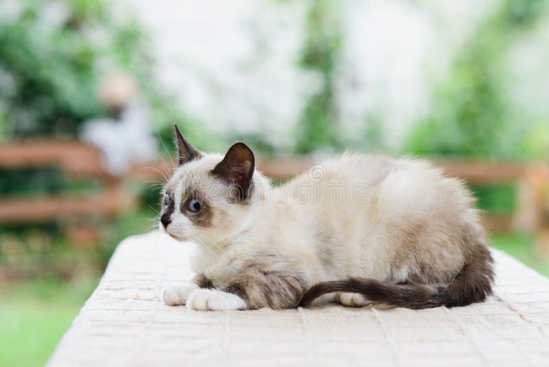 与惊奇的眼睛的逗人喜爱的失望的小猫猫 库存照片