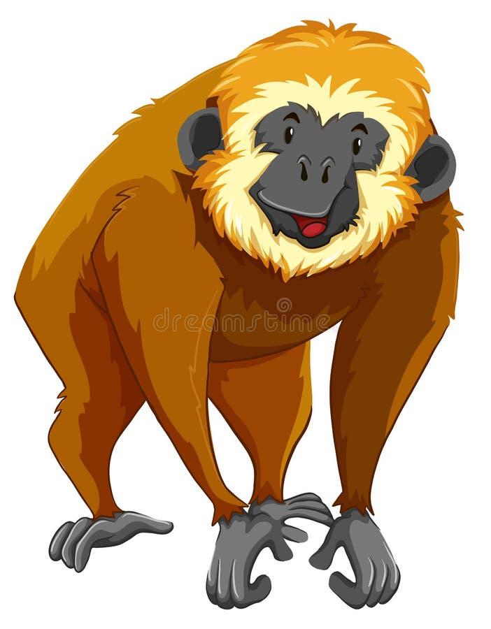 与愉快的面孔的布朗长臂猿 皇族释放例证