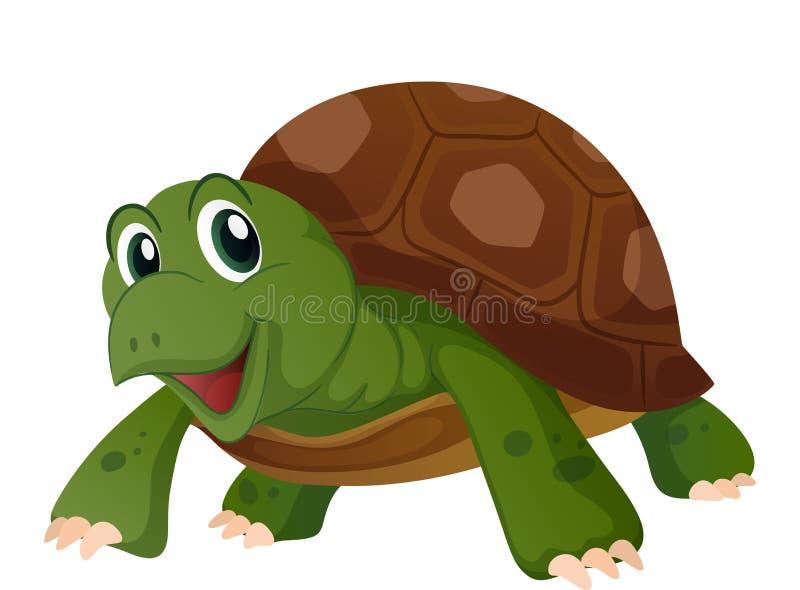 与愉快的面孔的逗人喜爱的乌龟 库存例证