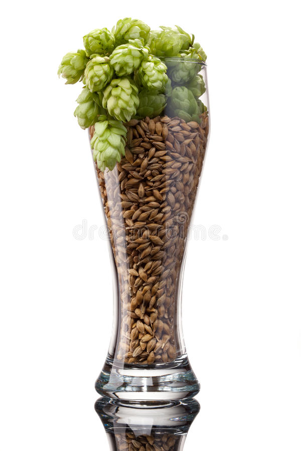 与成份的啤酒杯 免版税库存照片