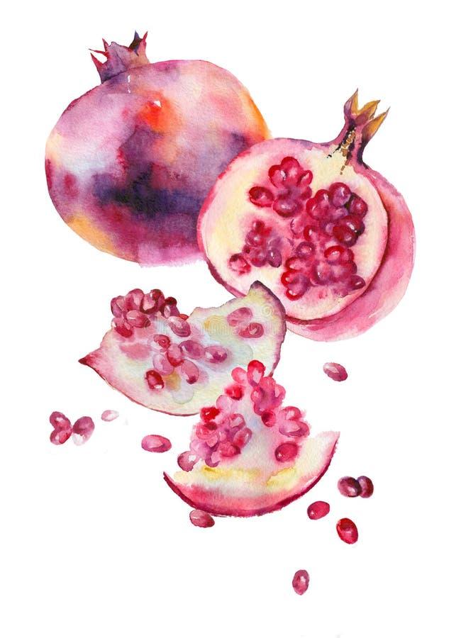 与成熟石榴石和种子的水彩剪影在白色 皇族释放例证