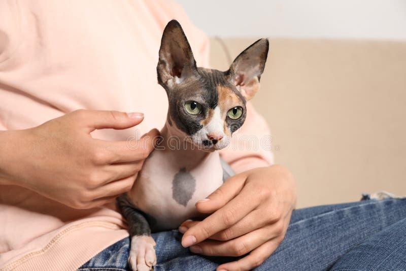 与户内所有者的逗人喜爱的sphynx猫 免版税库存照片