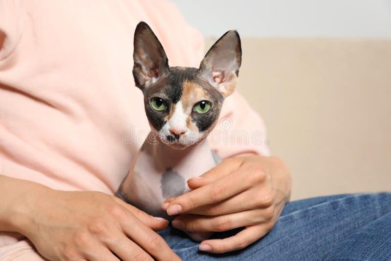 与户内所有者的逗人喜爱的sphynx猫 友好的宠物 免版税库存图片