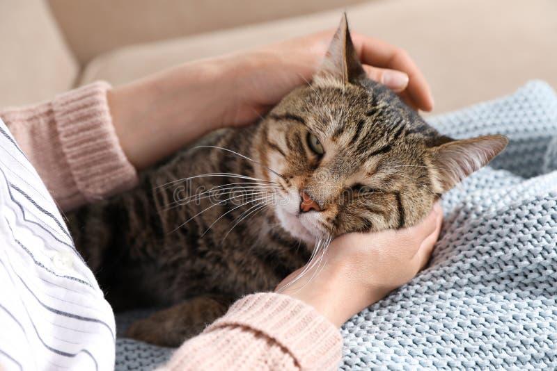 与所有者的逗人喜爱的虎斑猫在沙发 友好的宠物 图库摄影