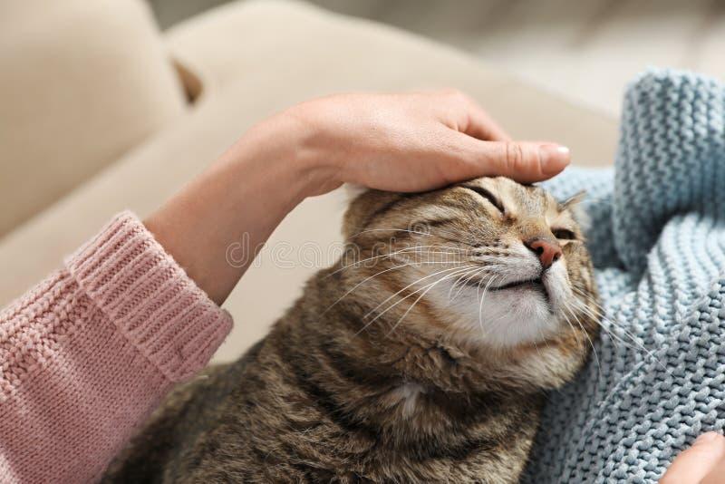 与所有者的逗人喜爱的虎斑猫在沙发 友好的宠物 库存图片