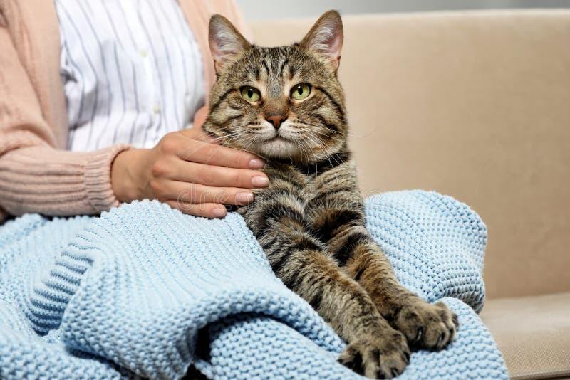与所有者的逗人喜爱的虎斑猫在沙发 友好的宠物 免版税库存图片