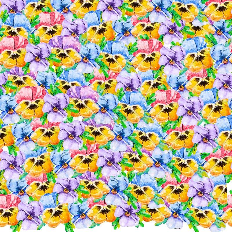 与手拉的三色堇中提琴花的水彩五颜六色的花卉无缝的样式纺织品的,织品,墙纸,包裹 库存例证