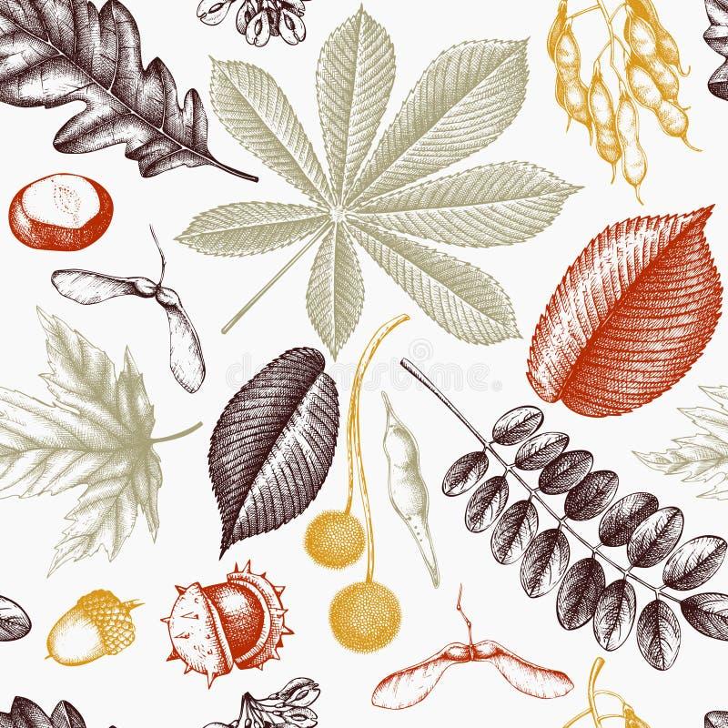 与手拉的叶子和种子例证的无缝的样式 秋天背景eps包括的向量 葡萄酒植物的设计 向量例证