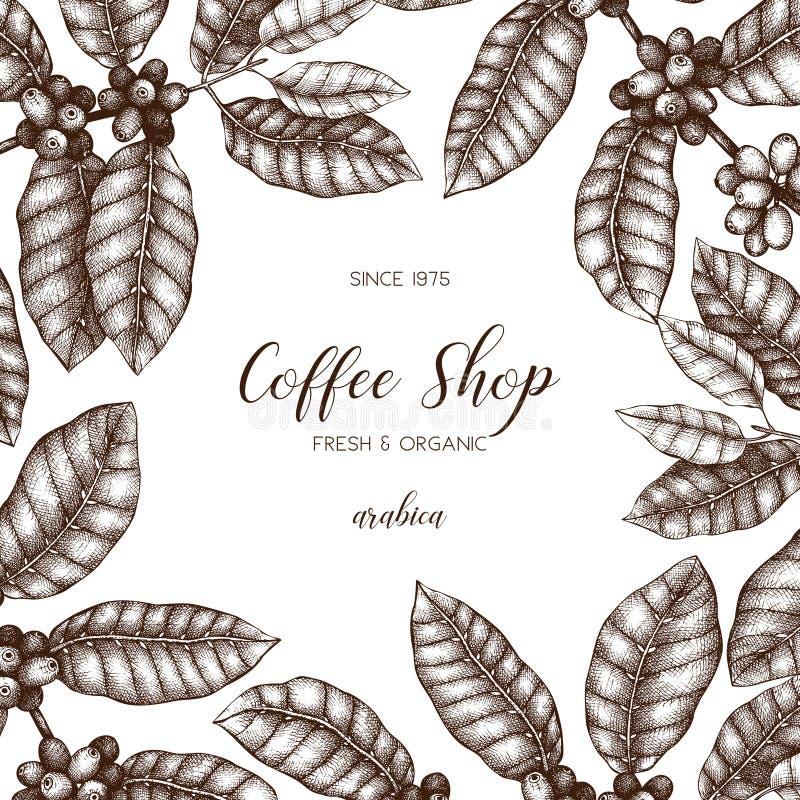 与手拉的咖啡植物剪影的传染媒介设计 阿拉伯咖啡的植物的例证用果子 葡萄酒咖啡包装的templat 向量例证