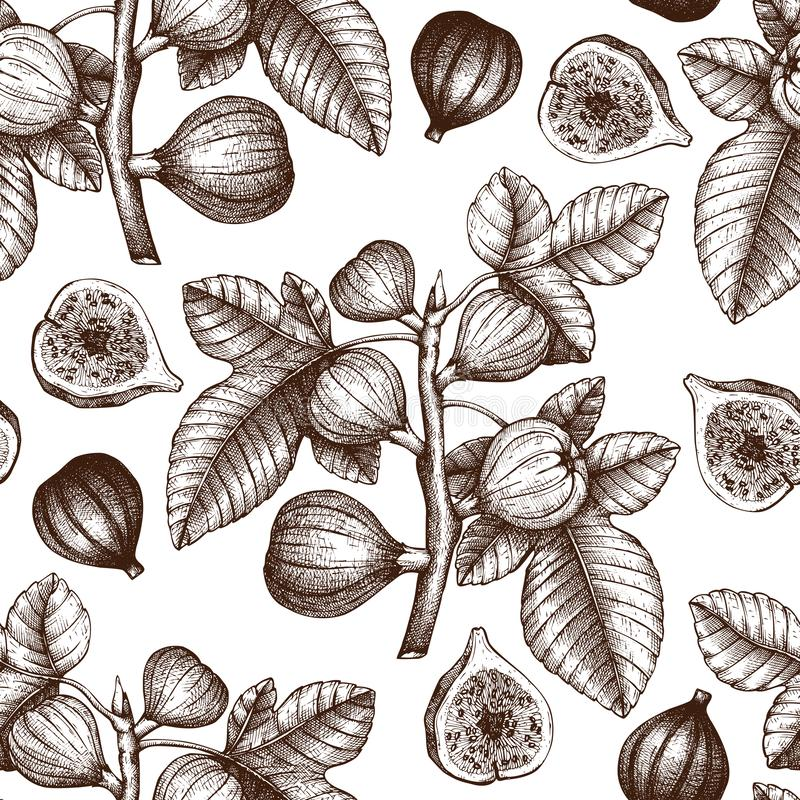 与手拉的无花果剪影的无缝的样式 与被刻记的无花果果子分支的传染媒介背景 与botanica的葡萄酒例证 皇族释放例证