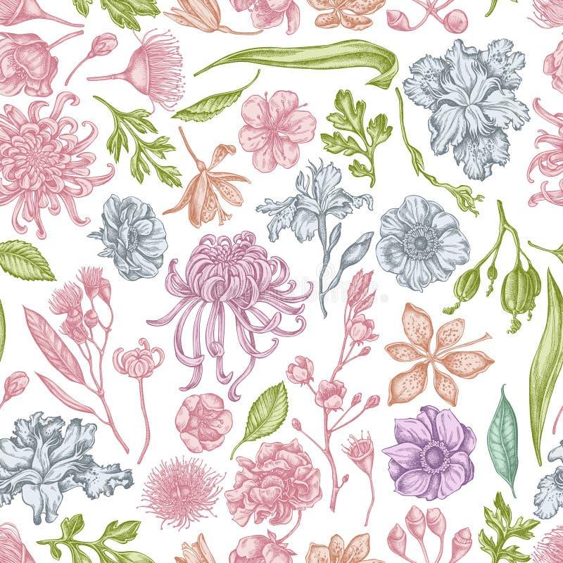 与手拉的淡色日本菊花,黑莓百合,玉树花,银莲花属,虹膜的无缝的样式 库存例证