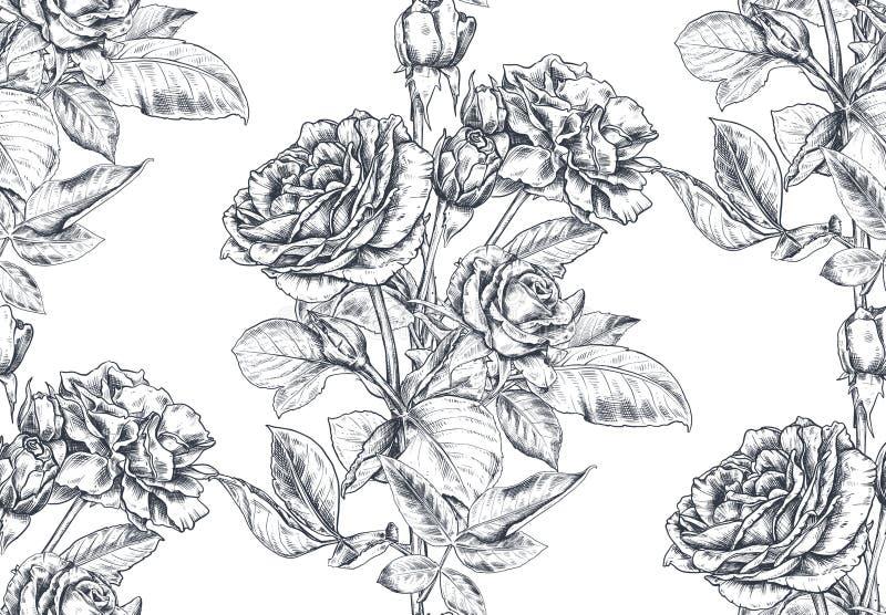 与手拉的玫瑰色花和叶子的传染媒介无缝的样式在白色 皇族释放例证
