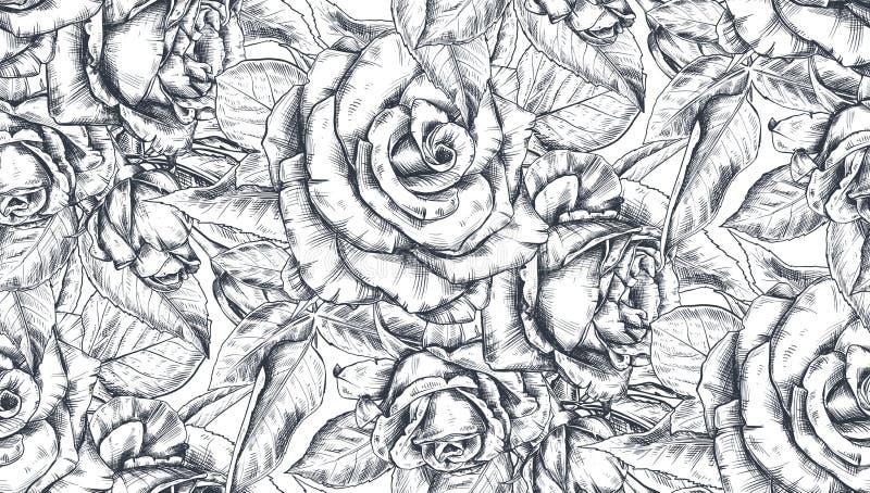 与手拉的玫瑰色花和叶子的传染媒介无缝的样式在白色 向量例证