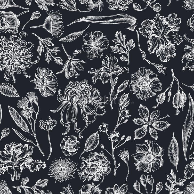 与手拉的白垩日本菊花,黑莓百合,玉树花,银莲花属,虹膜的无缝的样式 向量例证
