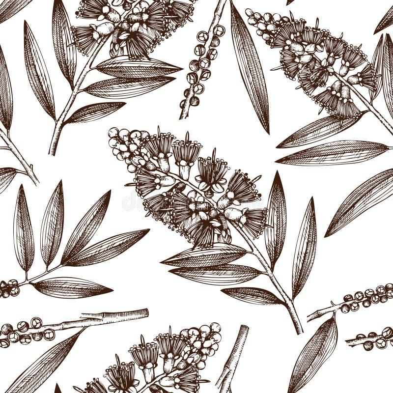 与手拉的茶树剪影的葡萄酒背景 化妆用品和医疗加州桂植物无缝的样式 传染媒介cajeput树马胃蝇蛆 皇族释放例证