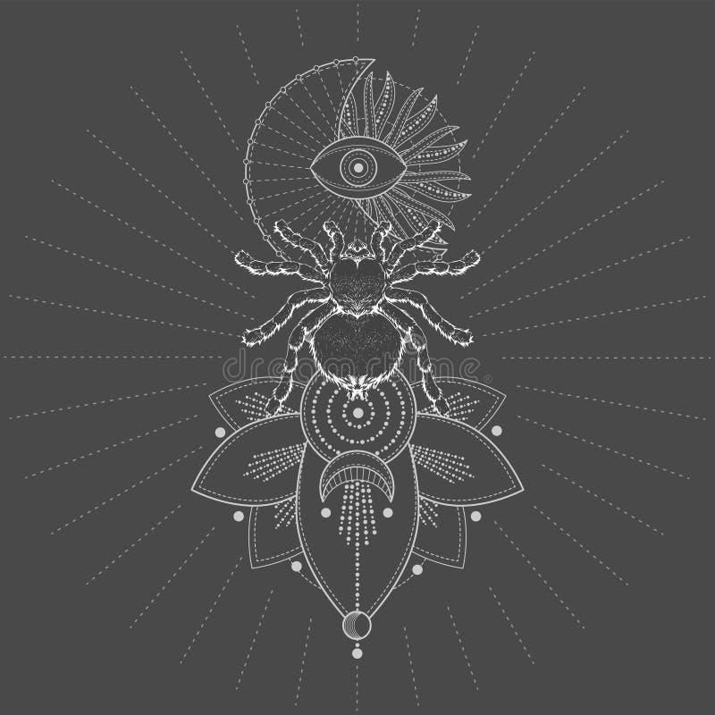 与手拉的蜘蛛塔兰图拉毒蛛和神圣的标志莲花的传染媒介例证在黑背景 抽象神秘的标志 皇族释放例证
