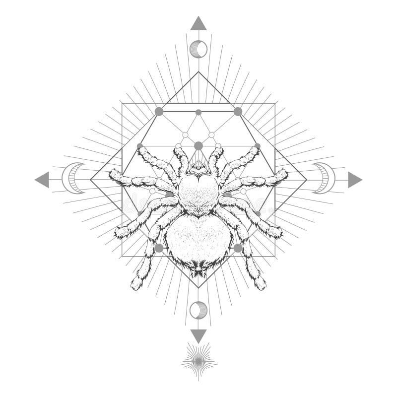 与手拉的蜘蛛塔兰图拉毒蛛的传染媒介例证和在白色背景的神圣的几何标志 抽象神秘的标志 投反对票 库存例证