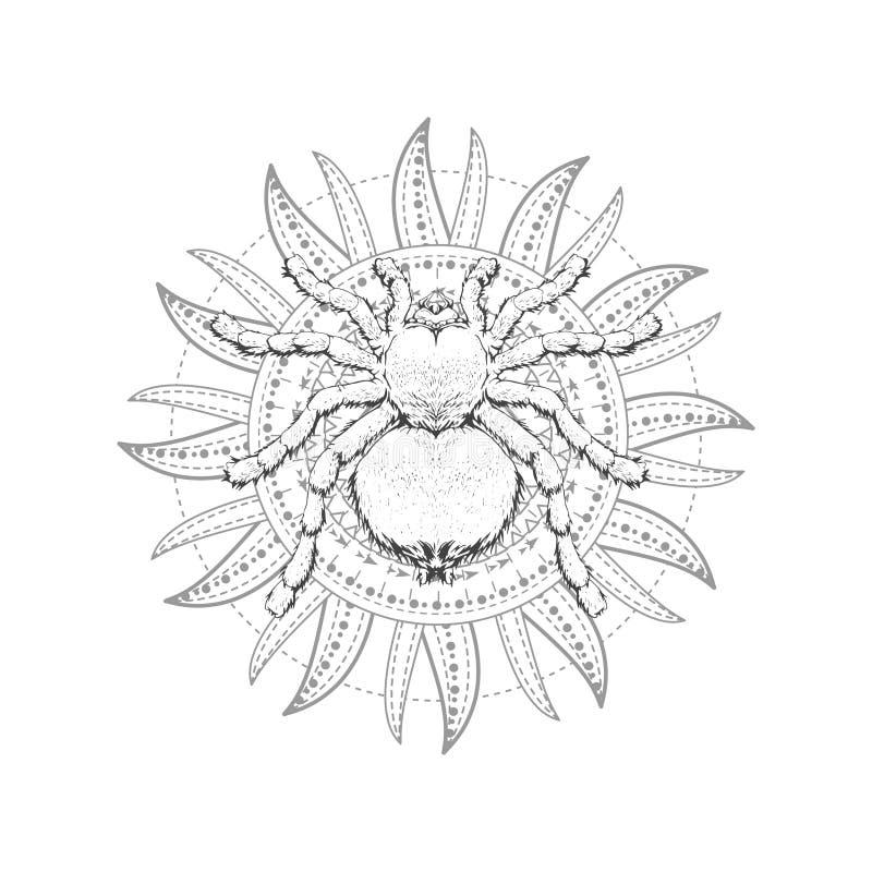 与手拉的蜘蛛的传染媒介例证和在白色背景的神圣的几何标志 抽象神秘的标志 皇族释放例证