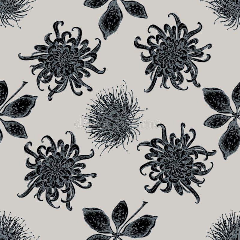 与手拉的风格化日本菊花,黑莓百合,玉树花的无缝的样式 库存例证