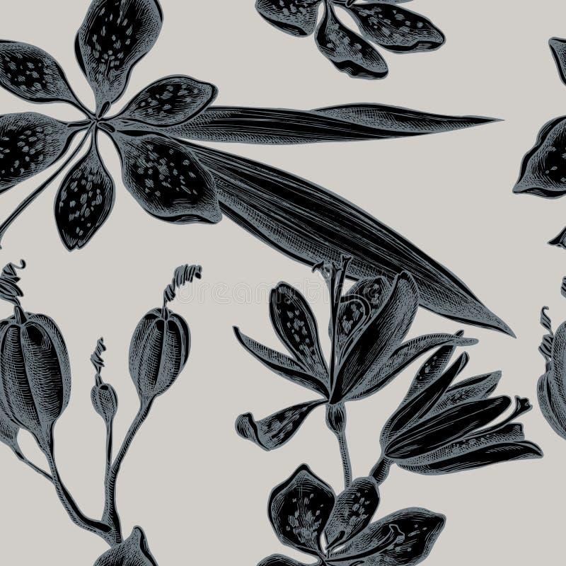 与手拉的风格化黑莓百合的无缝的样式 库存例证