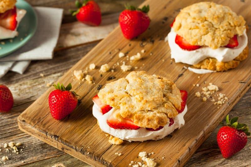 与打好的奶油的自创草莓脆饼 库存照片