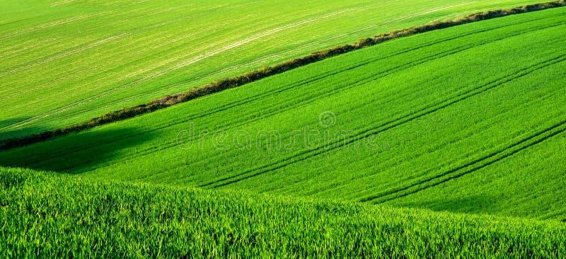 与拖拉机跑绿色领域,苏克塞斯,英国的轮胎轨道线的绿色滚动的麦田  免版税图库摄影